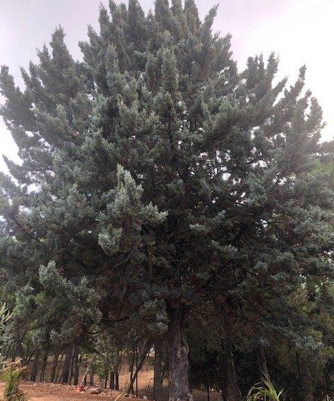 Paseando un día entre la vegetación del Jardín del Recuerdo, fijé mi vista en un hermoso árbol. Desde lo lejos sentí su llamada. Conforme me iba acercando, notaba la conexión que entre ambos estaba surgiendo, mientras mecía sus ramas al son de la brisa.
